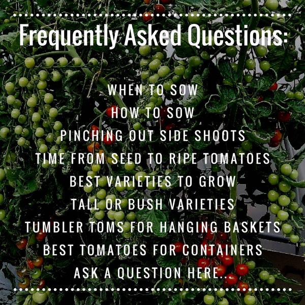 tomato frequently asked questions