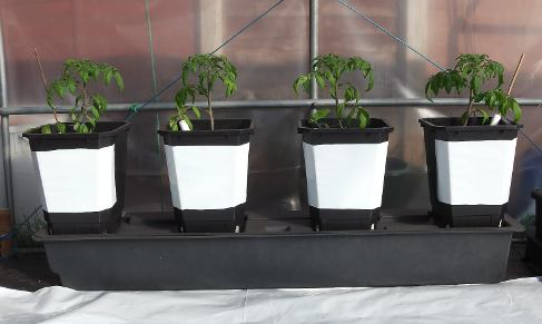 Pots with reflective white covers for hot direct sunlight.