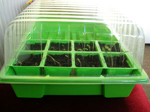 propagator for germinating and growing tomatoes from seed