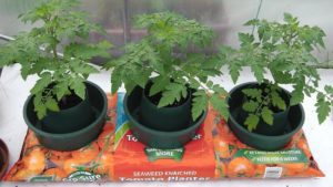 Watering - Grow Pots in Grow Bags