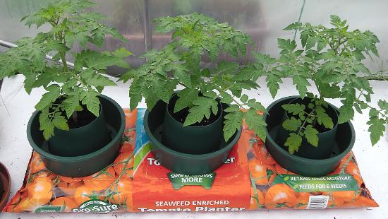 Growing tomatoes in Grow Pots in Grow Bags.