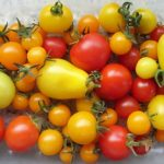 Selection of Tomato Varieties