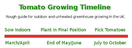 Tomato Growing Timeline for sowing, planting and picking UK