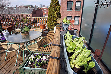 Tips For A Patio Vegetable Garden