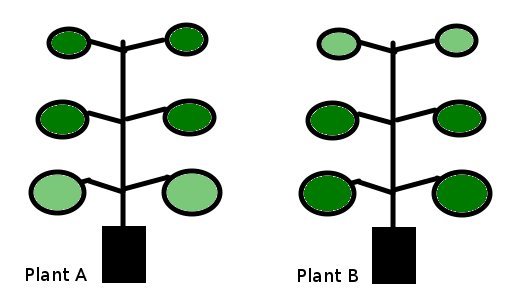 Plants Compared