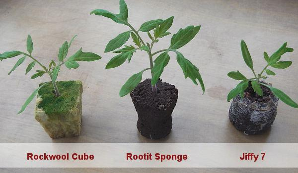 Media used for sowing tomato seeds including rockwool cubes, sponges and jiffy pellets.
