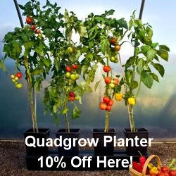Quadgrow Planter for Tomatoes