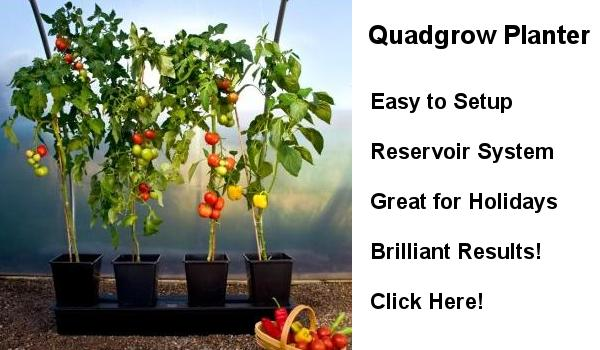 Quadgrow Planter