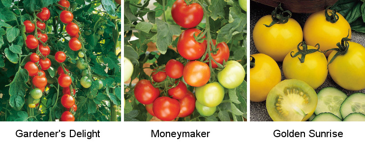 Three Heirloom Tomato Varieties