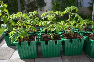Best Self Watering Planter For Tomatoes Tomato Growing