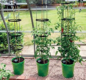 Best self watering planter for tomatoes tomato growing - How often to water vegetable garden ...