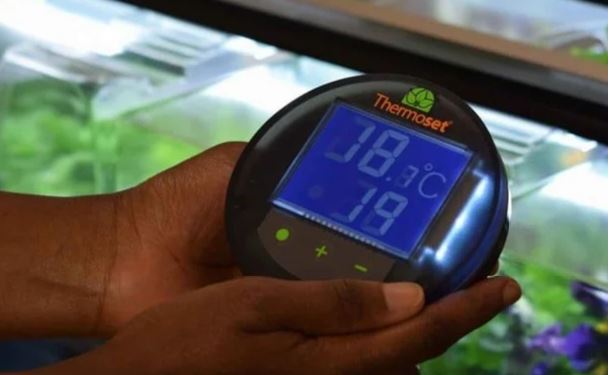 Heated propagator for tomatoes with thermostat.