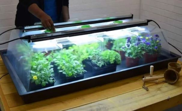 Heated propagator with grow lights - ideal for tomatoes.