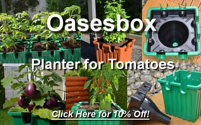 Oasesbox self watering planter for tomatoes.